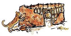 Sungura & Leopard artwork